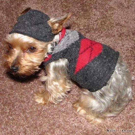Носки для собак  из старой одежды