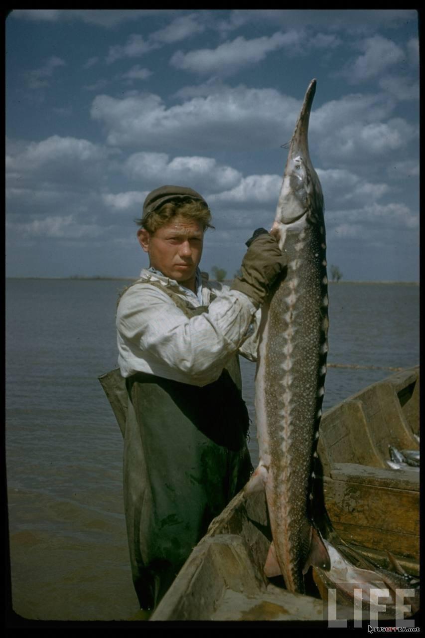 рыбаки с уловом из волги