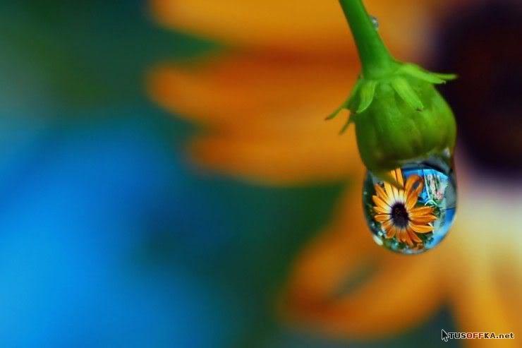 Macro photography water drop refractions
