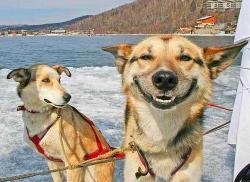 Животные - улыбаки